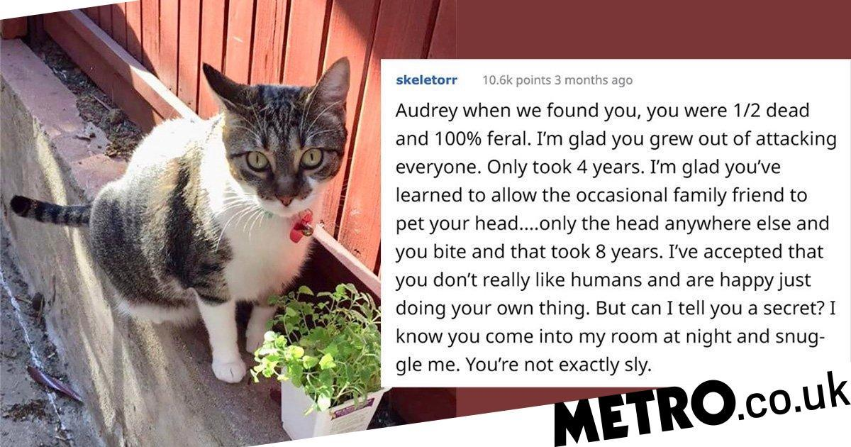 Woman writes letter to 'unfriendly' cat to tell the world about her sweet side