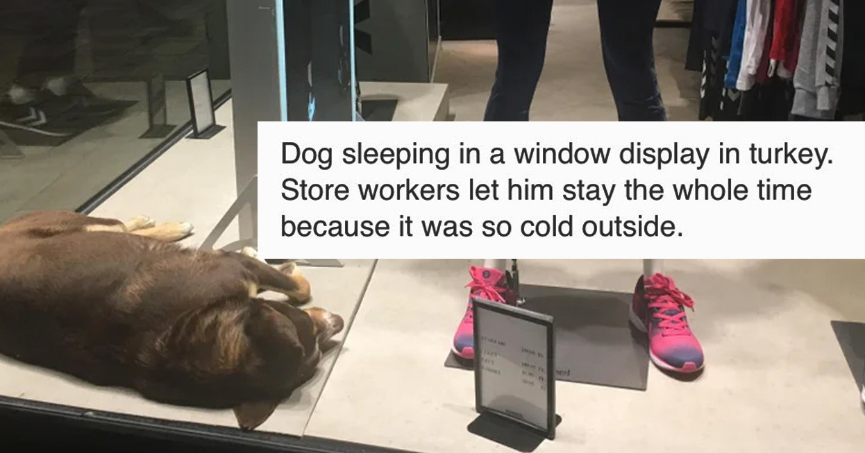17 People Who Saw A Dog In Need And Came To The Rescue