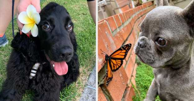 """14 Dogs Posts From This Week That'll Make You Say, """"Welp, Time To Adopt A Dog"""""""