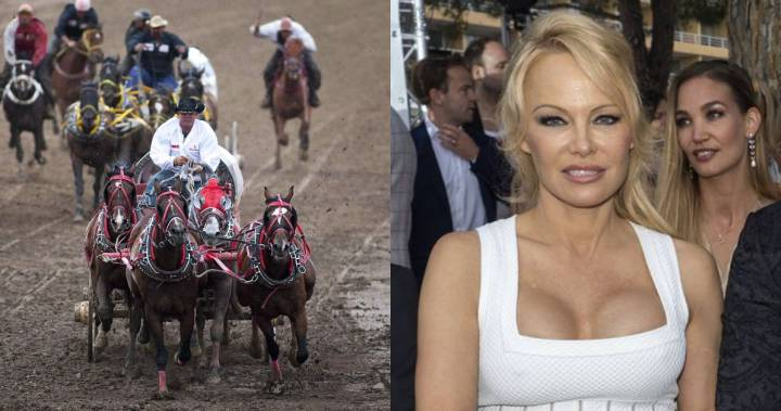 Pamela Anderson calls on Alberta premier to end chuckwagon races
