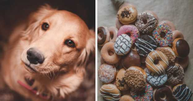 Eat A Bunch Of Donuts And We'll Reveal What Type Of Dog You Should Get