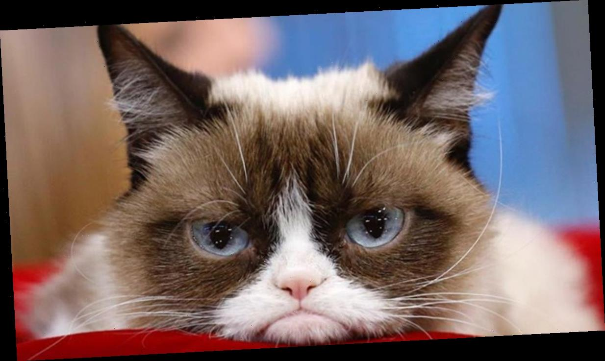 Grumpy Cat Sues Rip-off Companies from the Grave for Copycat Merchandise