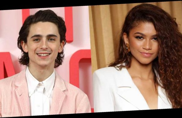 Timothée Chalamet and Zendaya Were Seen Shopping at a Bed Bath & Beyond