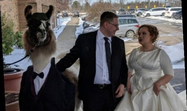 This Guy Crashed His Sister's Wedding With A Llama, Just As He Promised He Would