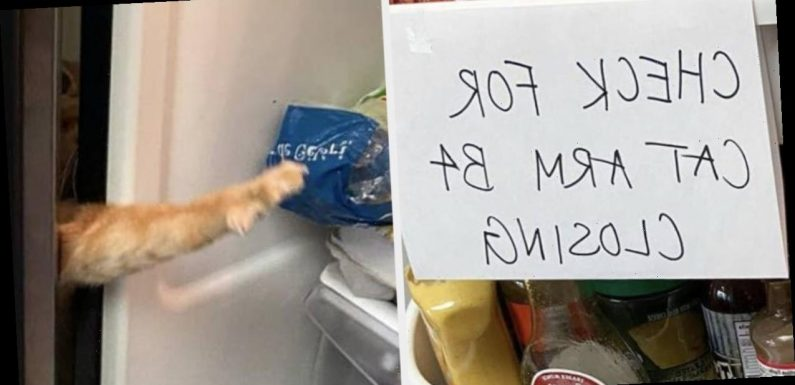 This Cat Named Carrot Has Gone Viral For Getting His Little Paws In The Fridge