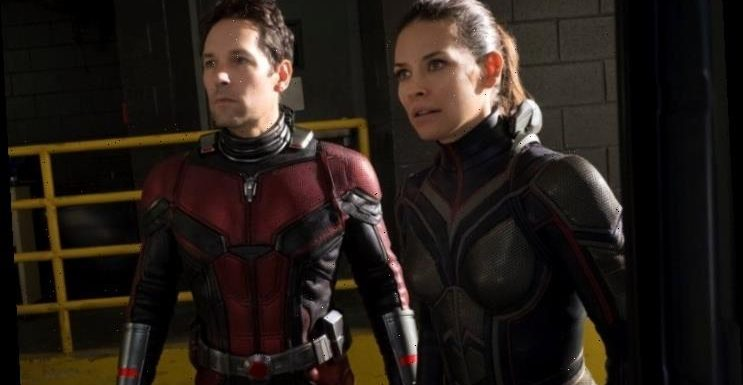 Evangeline Lilly to Share Equal Billing With Paul Rudd in 'Ant-Man 3'