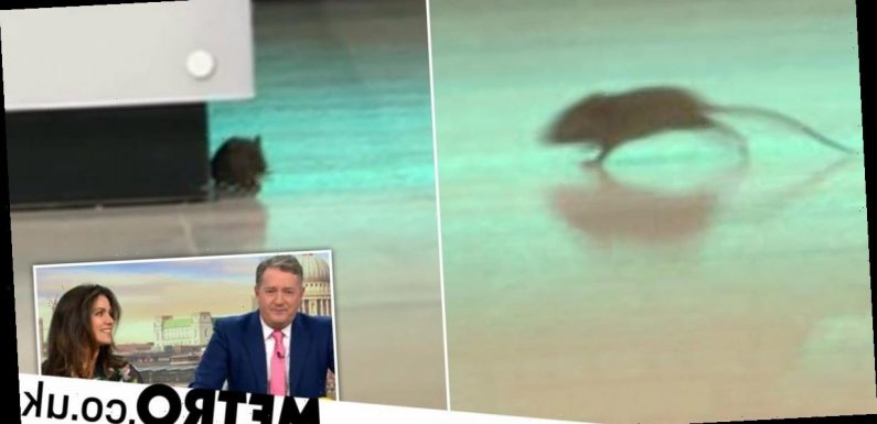 Good Morning Britain thrown into chaos as mouse is spotted on set live on air