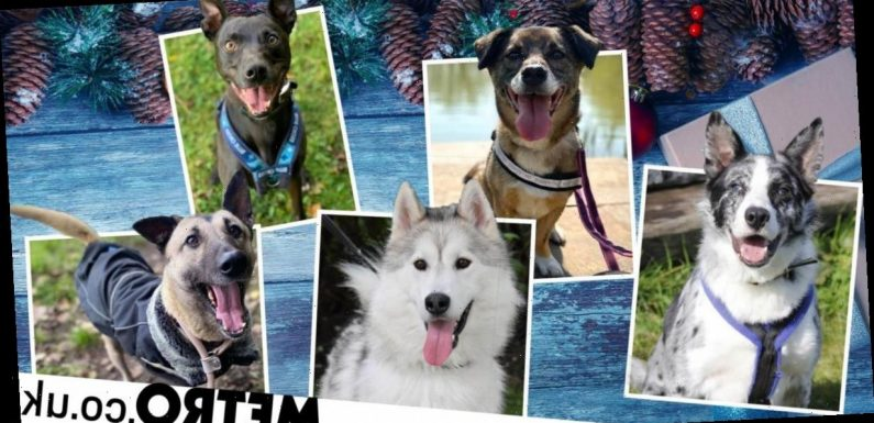 16 dogs looking for homes this Christmas