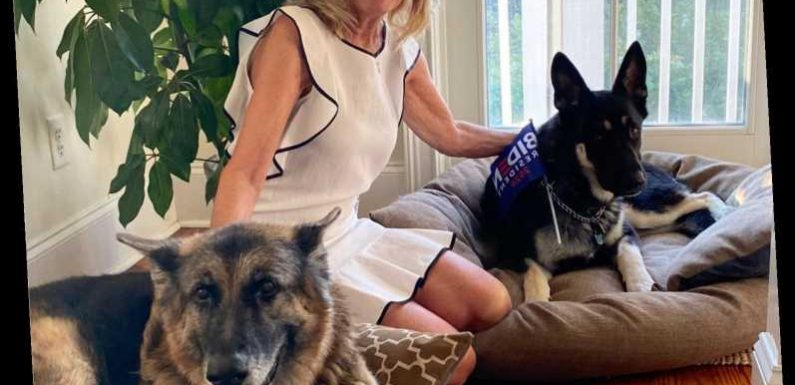 Champ & Major Biden have finally arrived at the White House, but where's Jill's cat??