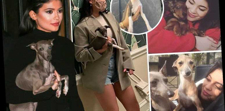 Kylie Jenner's long list of pups including Norman, Bambi, Wesley, Penny, Ernie, Odie & Sophia as star buys new dog Kevin