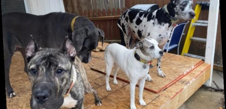 Dumped in a Parking Lot, Ethan the Emaciated Dog Is Now Gaining Weight and Making Friends