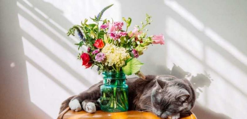 Everyone's using flower subscription boxes to keep their homes full of blooms