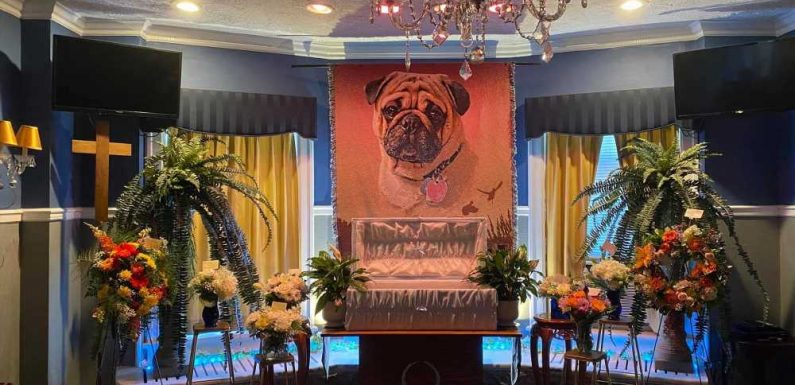 Adorable pup gets extravagant funeral, obituary for being a good boy