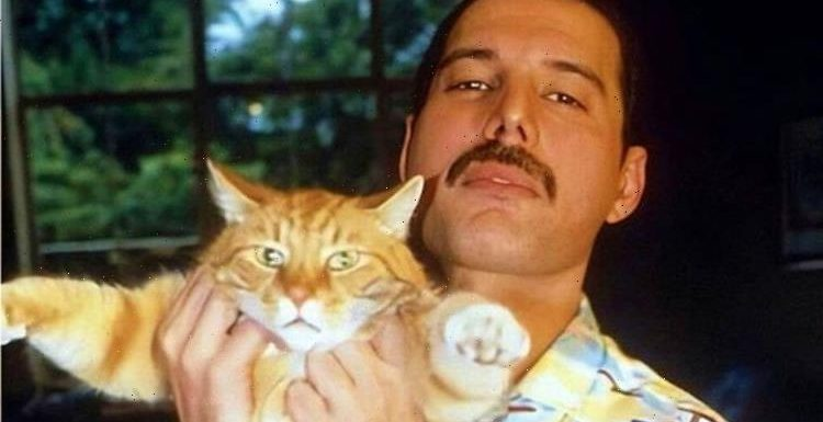 Freddie Mercury incredible tribute to his cats: Did Queen star leave his cats everything?