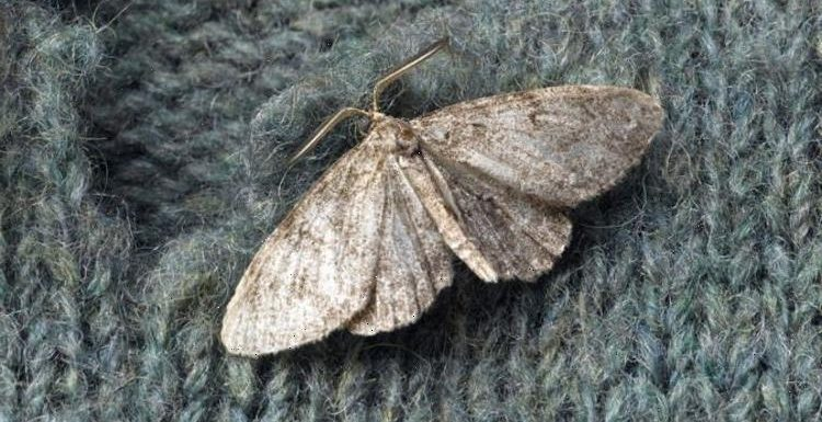 How to get rid of moths from your wardrobes and cupboards