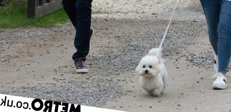 Who traps Princess the dog in the car in Emmerdale and does she die?
