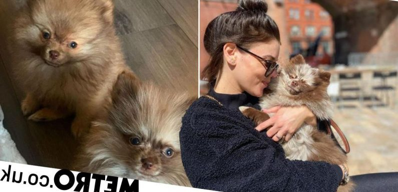 Coronation Street star Faye Brookes hits back at concerns over adorable dogs
