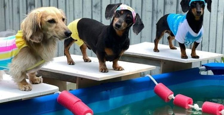 Watch: Cute Dachshunds compete in their very own dog-themed Olympic Games