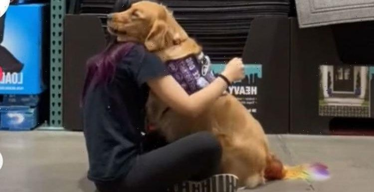 'It be ok' Therapy dog hugs owner during mental health training session in moving TikTok