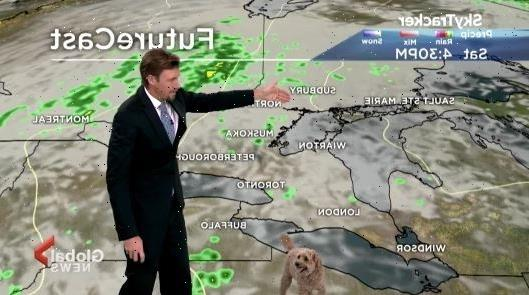 Weatherman mortified as pet dog gatecrashes live report about Hurricane Ida 'looking for treats'